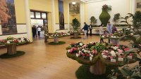 Camellia Expo