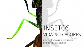 Insects - Life in the Azores